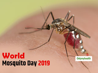 World Mosquito Day 2019: Know The Causes Of Malaria?
