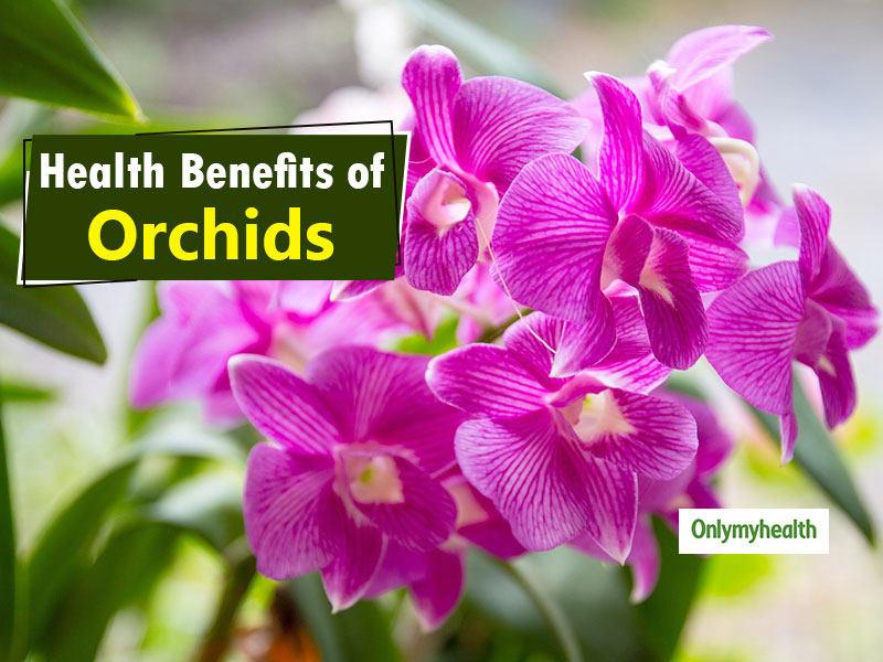 Orchid: Here's Some Magical Health Benefits Of This Decorative Flower
