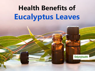 Eucalyptus <strong>Leaves</strong> Medicinal Uses: Know It's Health Benefits