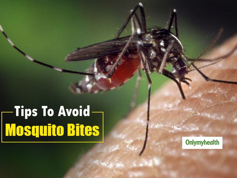 5 Tips To Avoid Mosquito Bites