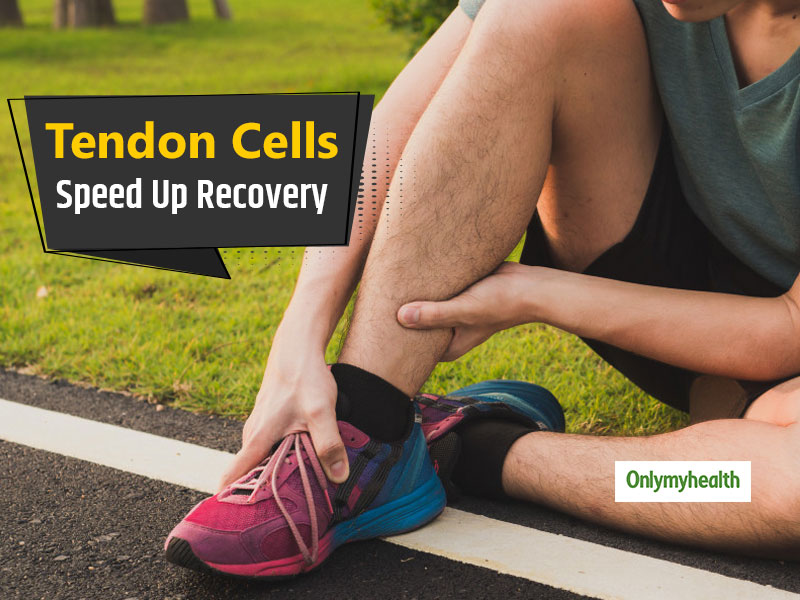 The Existence Of Tendon Stem Cells Proved Which Can Improve Injury Recovery: Study
