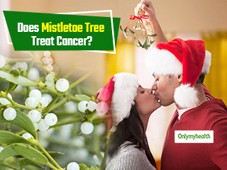 Can The Mistletoe Tree Miraculously Treat Cancer?