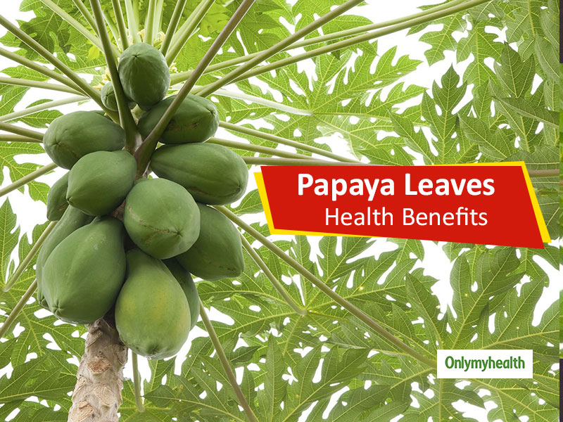 Papaya Leaves - Health Benefits: Do You Know How to Use This Medical Sheet