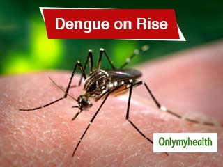 <strong>Dengue</strong> Incidence Up in Bengaluru's Ayyappa Nagar: Prevention & Tips Can Keep you safe