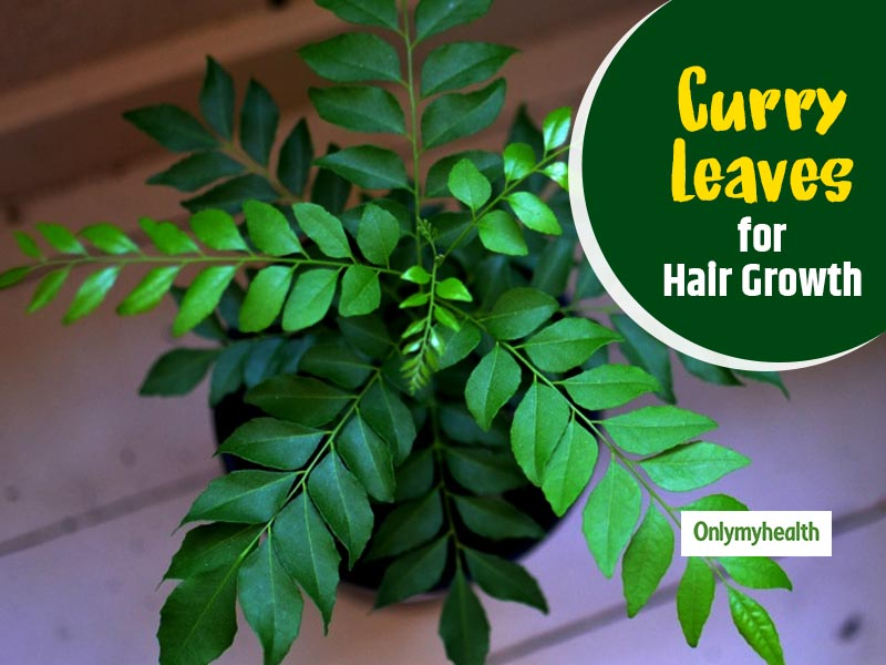 Curry Leaves for Hair Growth: Know ways to use curry leaves