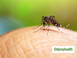 National Dengue Day 2019: Here are 6 <strong>Facts</strong> and <strong>Myths</strong> about Dengue