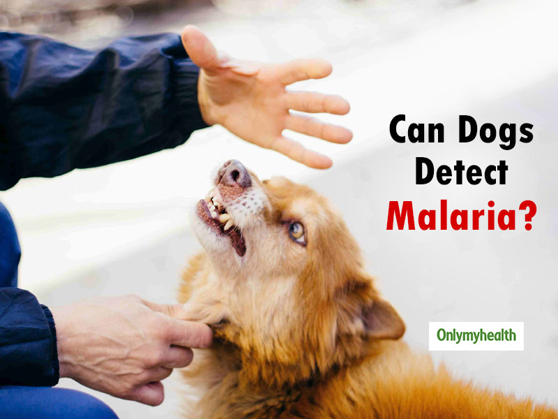 Dogs Can Detect Malaria In a Person Even Before The Symptoms Occur, Study Shows