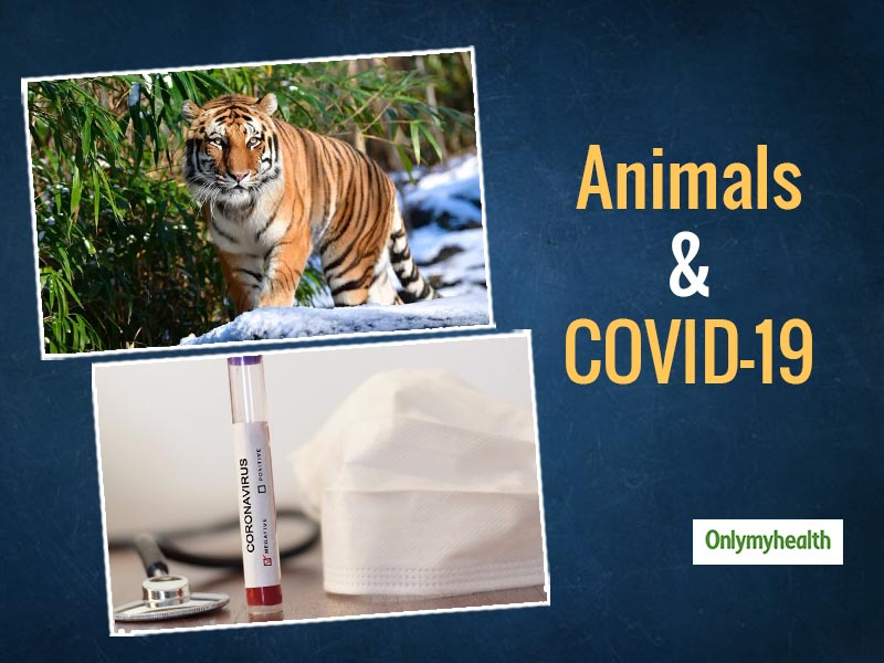 Human To Animal COVID-19 Transmission: What Precautions Are Necessary For Pet-Care?