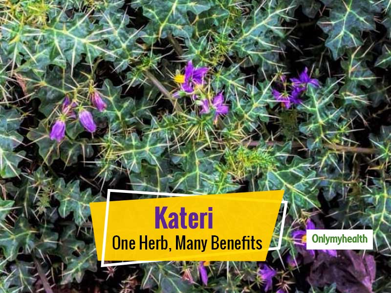 Kateri Herb- This Ayurvedic Herb Has Potential To Treat A Myriad Problems