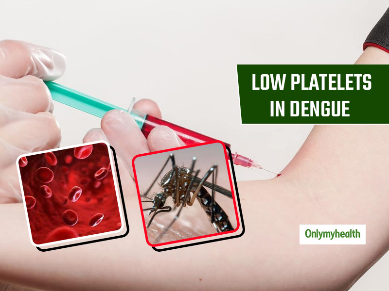 Why does Platelet Count decrease In Dengue Fever? Know The Reasons