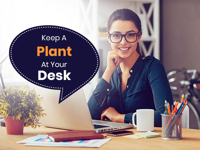 Keeping A Plant At Your Work Station May Help In Lowering Down Work Stress
