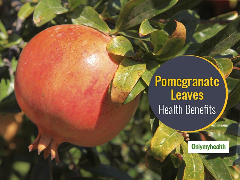 6 Health Benefits Of Pomegranate Tree Leaves
