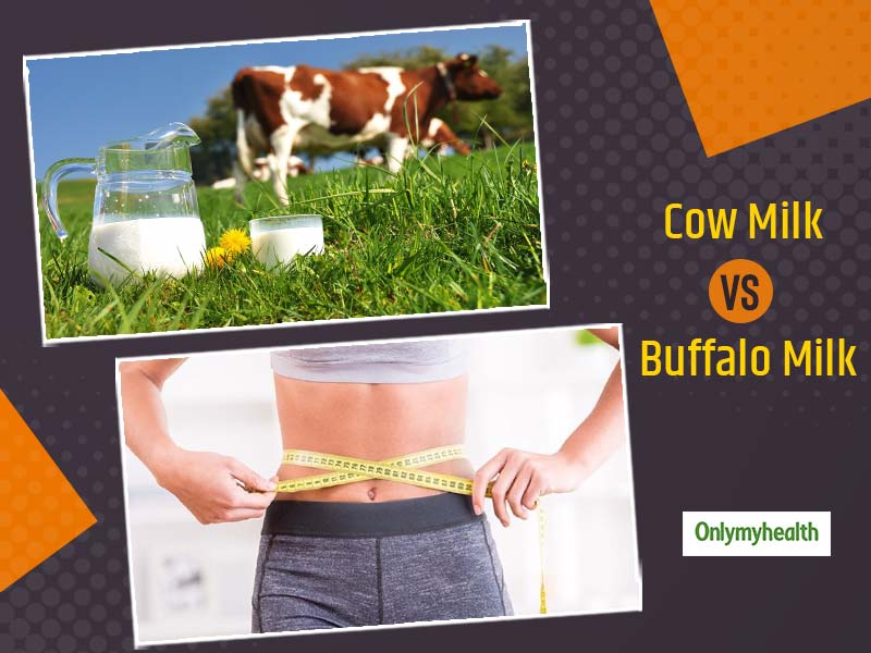 Buffalo Milk Vs Cow Milk: Which Is Better For Weight Loss And Why?