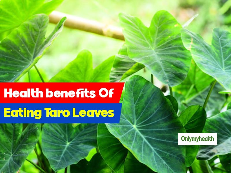 Taro Leaves: Nutritional Facts Of This Low-Calorie Green Leafy Veggie