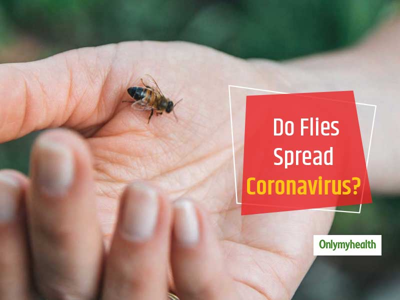 Ministry Of Health Clears The Air Whether Coronavirus Is Spread Through Flies or Not