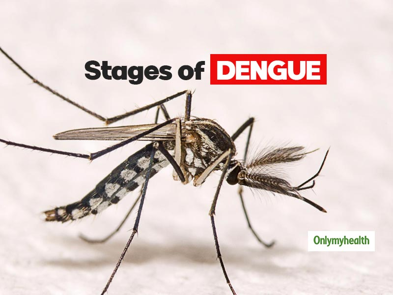 Dengue: Know About The Various Stages Of Dengue And Its Symptoms