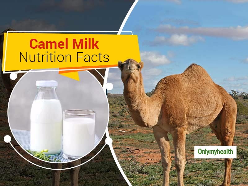 Camel Milk Nutrition Information: Here Are 6 Potential Health Benefits