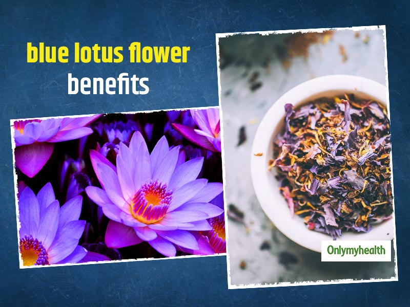 Blue Lotus Flower Medicinal Properties: Here Are Some Downsides And Risks Related To It