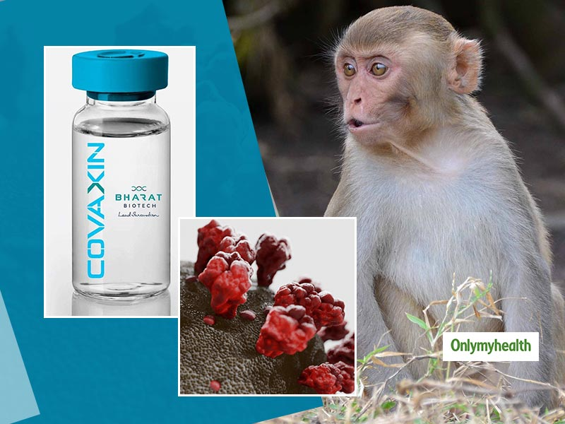 COVAXIN Animal Trial Gets Robust Immune Responses: Bharat Biotech