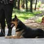 Sniffer Dogs to detect Lung Cancer?