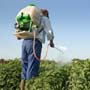Reduce your Exposure to <strong>Pesticides</strong>